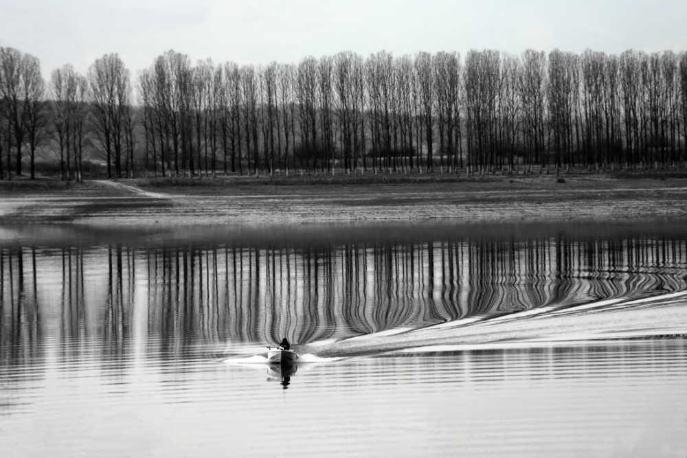 Ralitsa_Mateeva_Byalkova_Follow_the_trees_2018