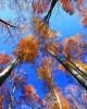 9 Есенно небе - октомври 2016