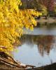 """Златна есен, езеро """"Загорка"""",  гр. Стара Загора"""