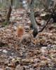 Приятел в гората - 2012 г